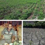 IKM Teh Kelor Moringa Perluas Lahan Budidaya Untuk Peningkatan Bahan Baku